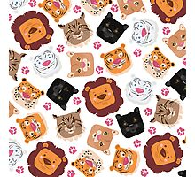 Smiley cats Photographic Print