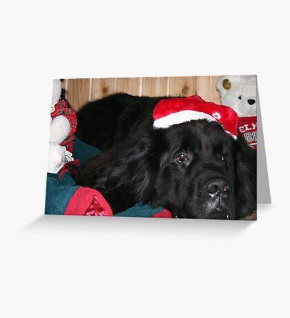 Newfoundland Dog Santa Hat Greeting Card
