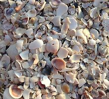 Floridian shells by egbphoto