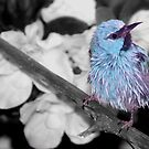 Blue Dacnis by Lisa G. Putman