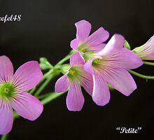 """Sweetness"" by Sue  Fellows"