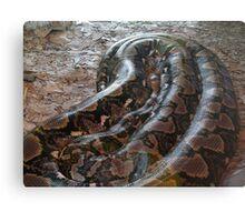 Python reticulatus Canvas Print