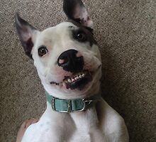 Silly Pitbull by cgraham13