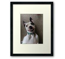 Silly Pitbull Framed Print