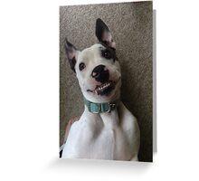 Silly Pitbull Greeting Card