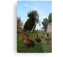 A day out in the park... Metal Print