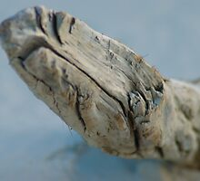 Corio Bay Driftwood by Smileyrie