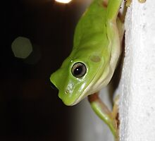 Wall frog by Jayson Gaskell