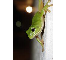 Wall frog Photographic Print