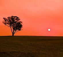 Drought sunset by Bernadette Maurer