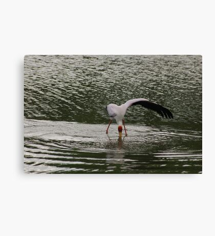 Clever fishing Canvas Print