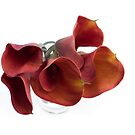 Dark red callas by zinchik