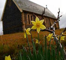 Early daffodils by Bernadette Maurer