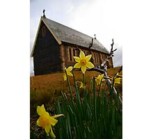 Early daffodils Photographic Print