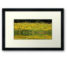 Field of Sunshine Framed Print