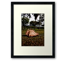 A Pledge To America: Turning A New Leaf Framed Print