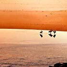 Seagull Huddle by wallarooimages