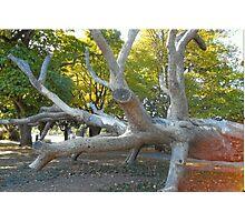 Fallen Log In Stanley Park,Vancouver Photographic Print