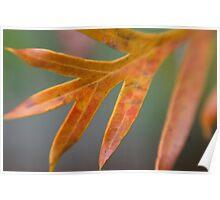 Grevillea Leaf Poster