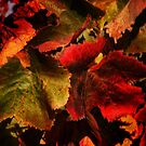 Fall in the Vinyard by Barbara  Brown