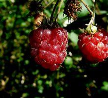 wild rasberries by AngelaFoster