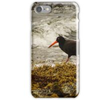 Sooty Oyster-Catcher  iPhone Case/Skin