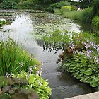 Pond at Hyde Hall by Susan E. King