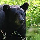 Mama Bear by Sherri Hamilton
