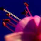 an odd view of the honeysuckle flower by SNAPPYDAVE