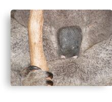 Furry Furry Close Up Canvas Print