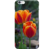 tulip in spring iPhone Case/Skin