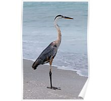Great Blue Heron at the Shore Poster