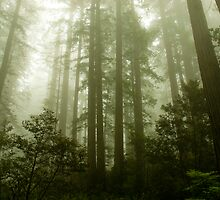 Foggy Trees by taylorswift