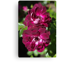 Double The Rose  Canvas Print