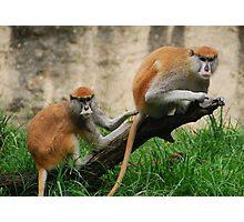 Houston Primates Photographic Print