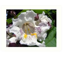 Vanilla Flower Art Print