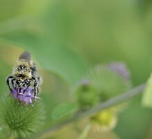 Pollination One by Jayson Brazell