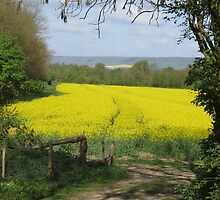 Field's edge footpath by Mortimer123