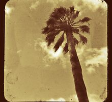 Palm Tree by Ross Jardine