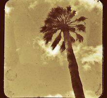 Palm Tree by Ross Jardine