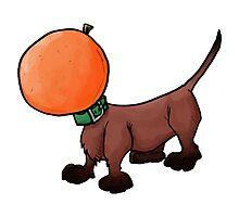Orange dachshund Photographic Print