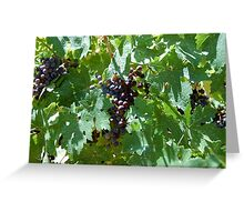 Vineyard grapes Greeting Card