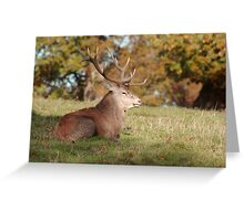 The Boss Stag (Red Deer) Greeting Card
