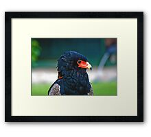 Bateleur-Eagle Framed Print