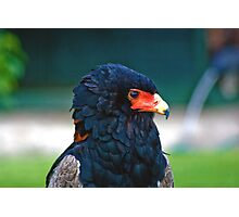 Bateleur-Eagle Photographic Print