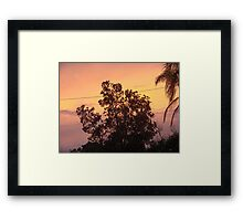 Colouful Banksia Sunset Framed Print