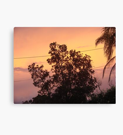 Colouful Banksia Sunset Canvas Print