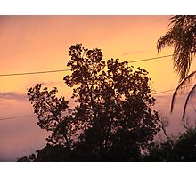 Colouful Banksia Sunset Photographic Print