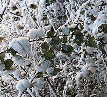 Snowy Trees by Cheryl Davies