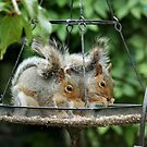 The Swinging Squirrels by AnnDixon